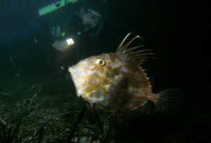 John Dory Spotted on 2009 Night Diver