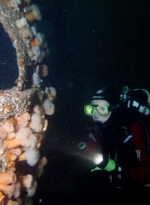 The Wreck of the Julia-T