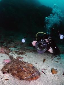 Monkfish by Darragh Norton