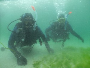 Order of Malta, go diving!