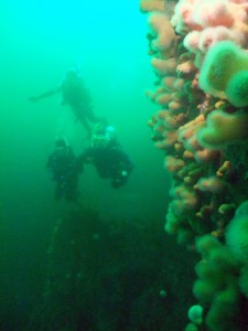 Our Advanced Openwater Course on their Deep Dive at Thany Beag