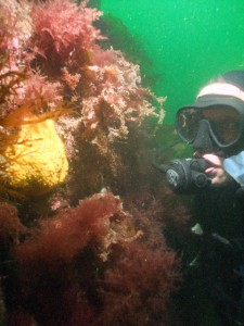Ronan & Sea Sponge