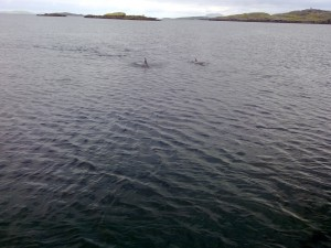 Dolphins Near the Boat Moorings on Sunday Morning