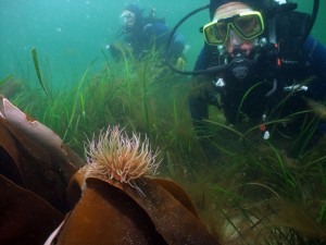 A standoff with Snakelock Anemone