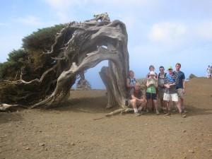 1000 year old Juniper trees, El Hierro