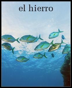 Clear water, abundant marine life