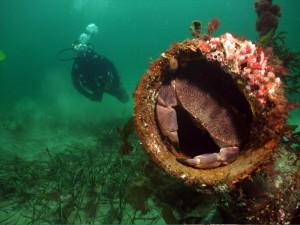 Abundant Marine Life