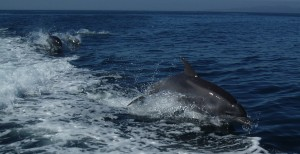 Dolphins on Sunday afternoon