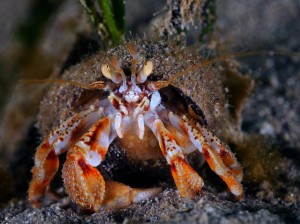 Hermit Crab by Darragh Norton